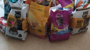 Czytaj więcej o: Zbiórka karmy dla bezdomnych kociaków