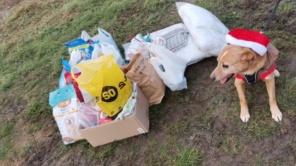 Czytaj więcej o: Świąteczna zbiórka dla bezdomnych zwierząt